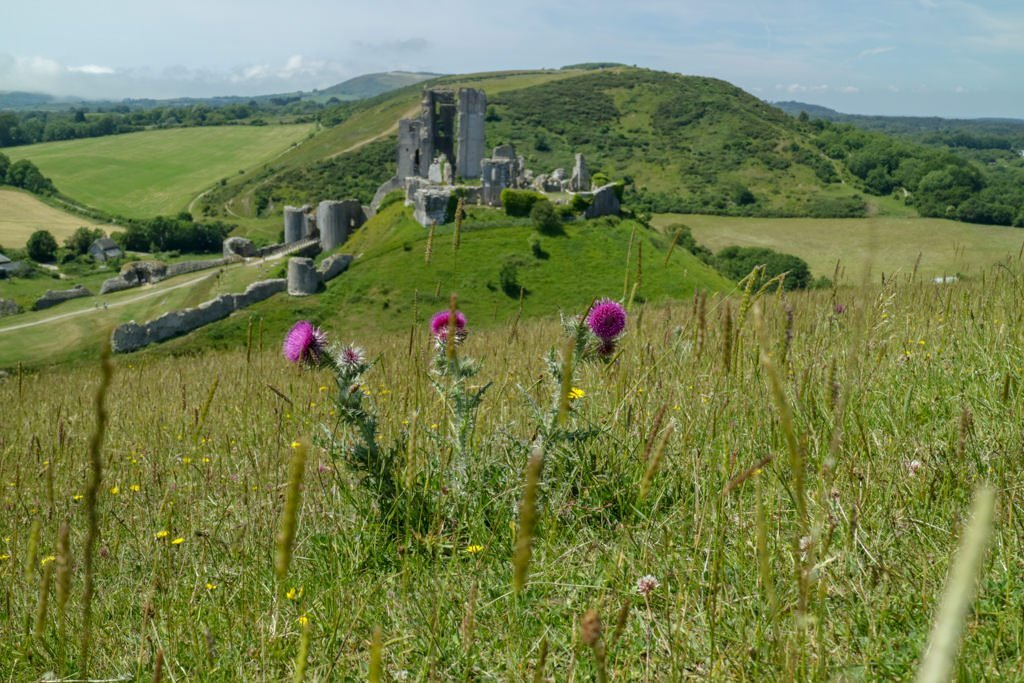 Corfe Castle and the Isle of Purbeck